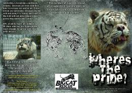 White Tiger Fact Sheet Brochure