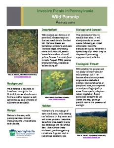 Wild Parsnip - Pennsylvania Department of Conservation and ...