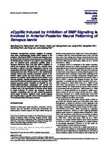 xCyp26c Induced by Inhibition of BMP Signaling Is ...