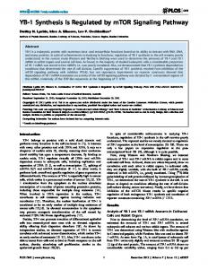 YB-1 Synthesis Is Regulated by mTOR Signaling Pathway - PLOS