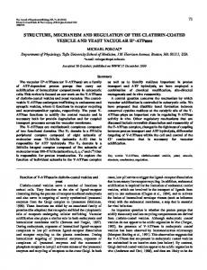Yeast and clathrin-coated vesicle V-ATPases - Journal of ...