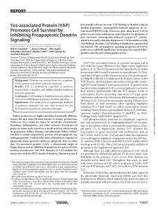 Yes-associated Protein (YAP) Promotes Cell ...