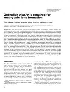 Zebrafish Hsp70 is required for embryonic lens formation - BioOne