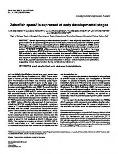 Zebrafish spata2 is expressed at early developmental stages - EHU