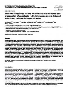 ZmMPK5 is required for the NADPH oxidase-mediated self